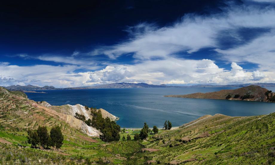 Боливия. Викуньи